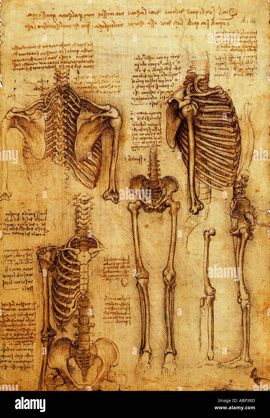 Anatomical Leonardo Da Vinci Stock Photos Anatomical Leonardo Da