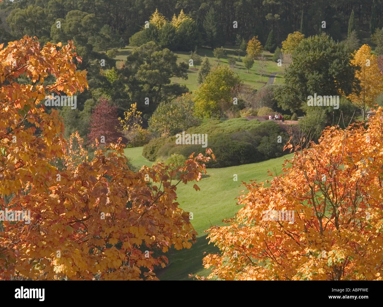 AUTUMNAL VIEW OF TREES TOPS AND DISTANT GARDEN, MOUNT LOFTY BOTANICAL GARDENS,  ADELAIDE, SOUTH AUSTRALIA, - Stock Image