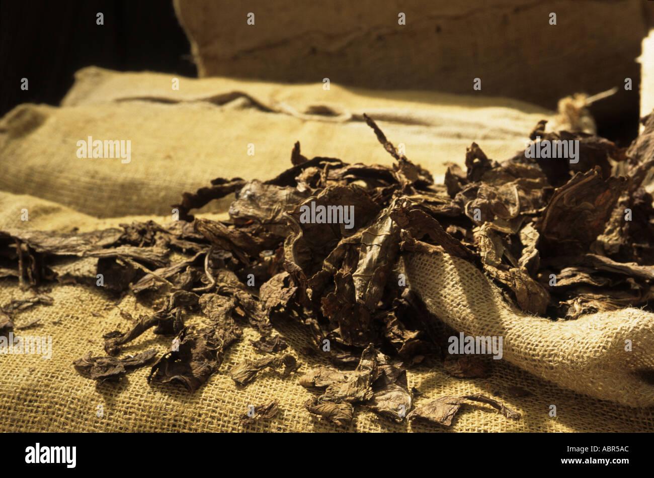 Cachoeira, Bahia State, Brazil. Shreds of tobacco on hessian sacking; Dannemann cigar factory. - Stock Image