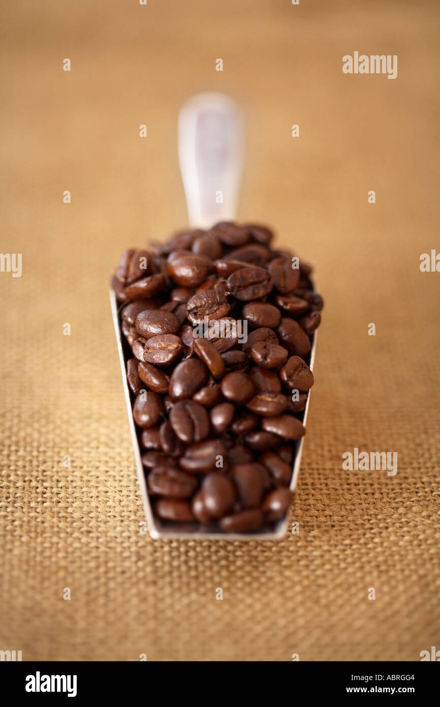 Scoop of coffee beans on burlap surface - Stock Image