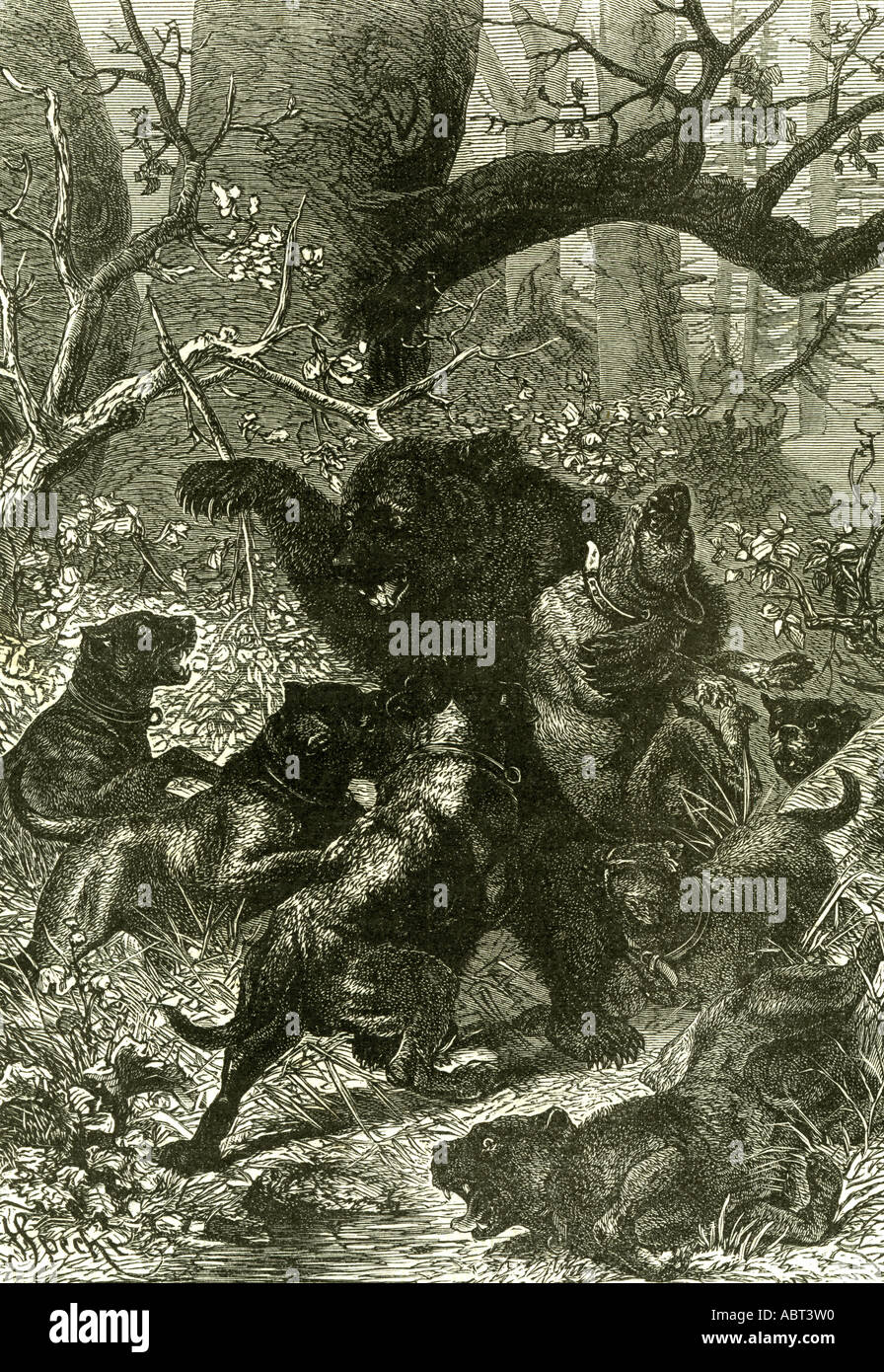 Bear Hunt 1891 Rossiya Russia - Stock Image