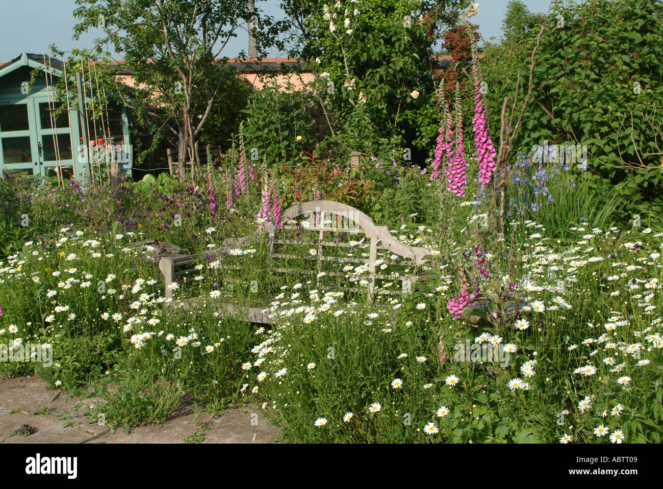 Old Garden Seat Amongst Foxgloves and Oxeye Daisies in a Devon Country Garden England United Kingdom UK Stock Photo