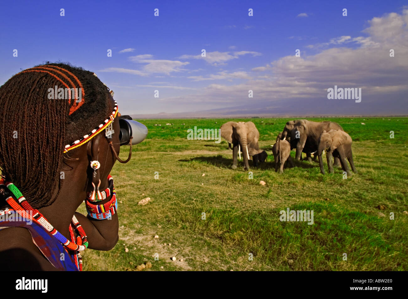 Maasai people Maasai guide in vehicle looking at elephant Model released Near Amboseli National Park Kenya - Stock Image