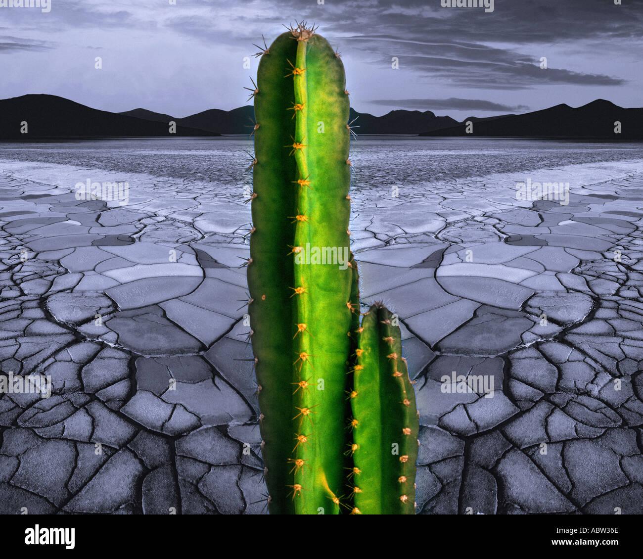 DIGITAL ART: Desert Scene - Stock Image