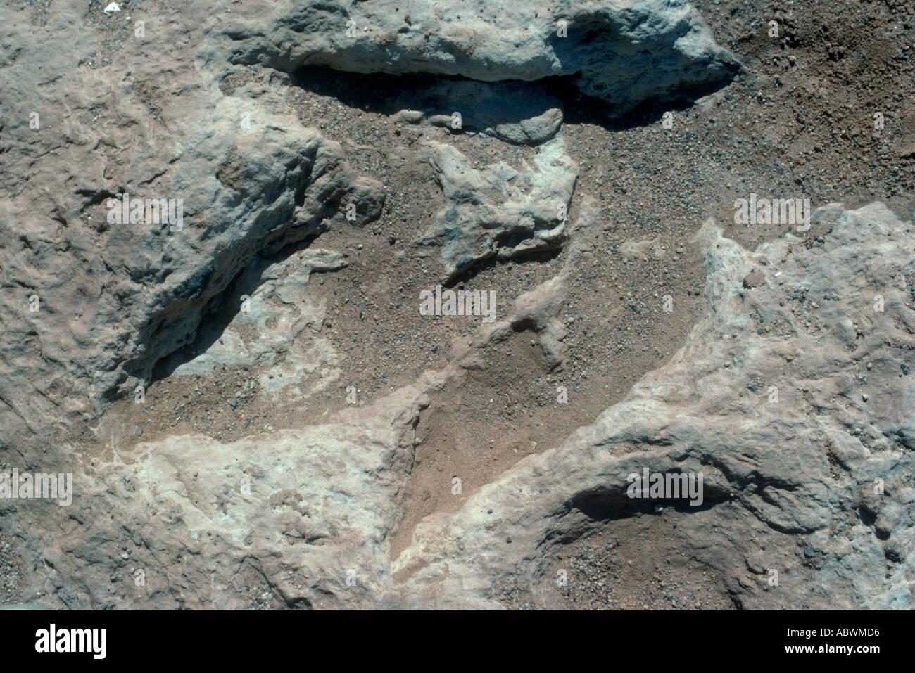 Dinosaur footprint, North Arizona, USA - Stock Image