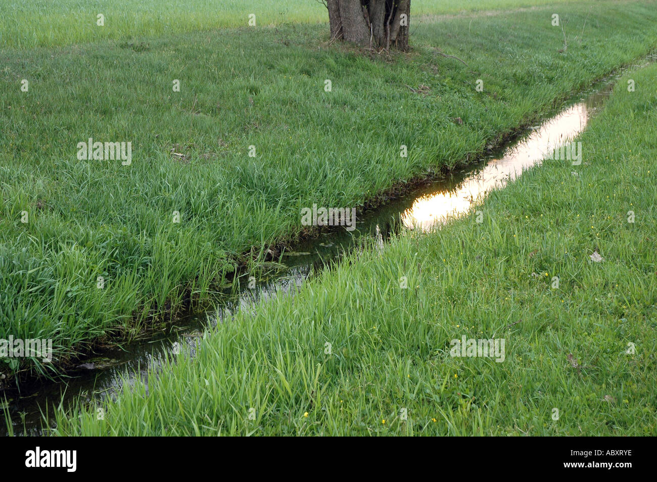 brook flowing through meadow Stock Photo