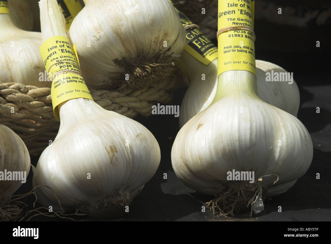 Isle of Wight grown elephant garlic at Winchester Farmers Market Hampshire UK - Stock Image