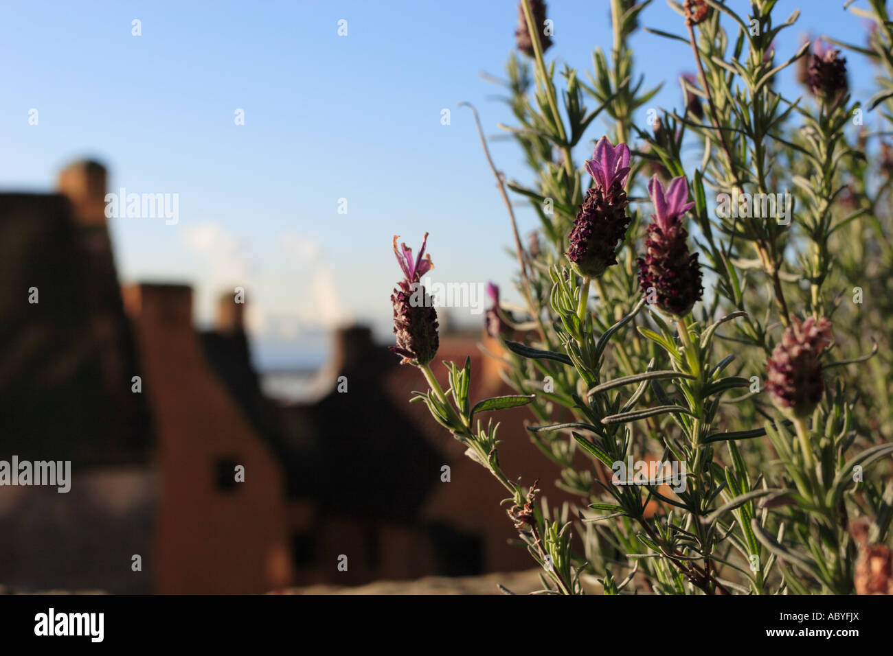 Rooftops from Culross Palace Garden - Stock Image