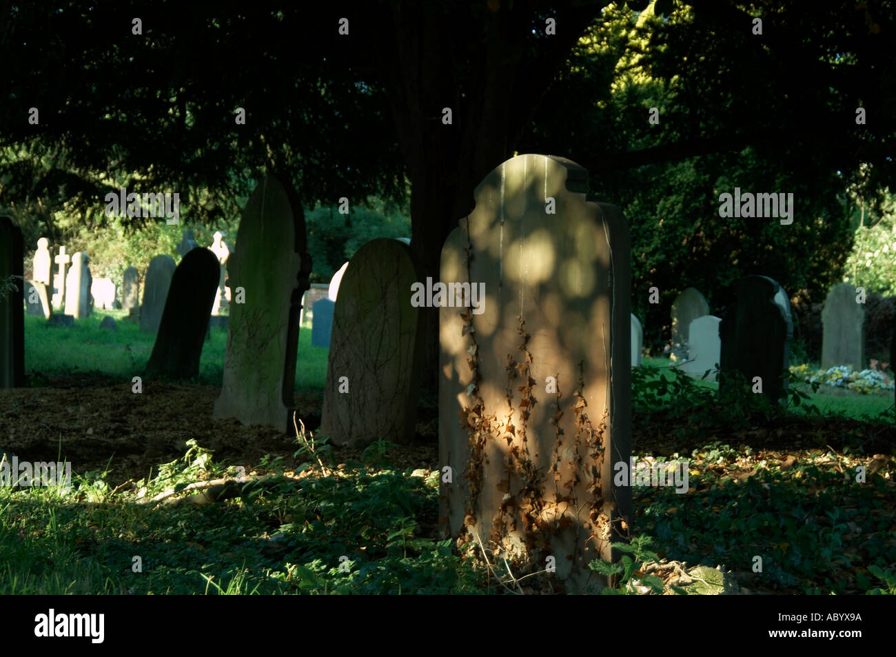 Gravestone with dappled light on it in cemetery dead die funeral old age stone grave headstone head buried bury - Stock Image