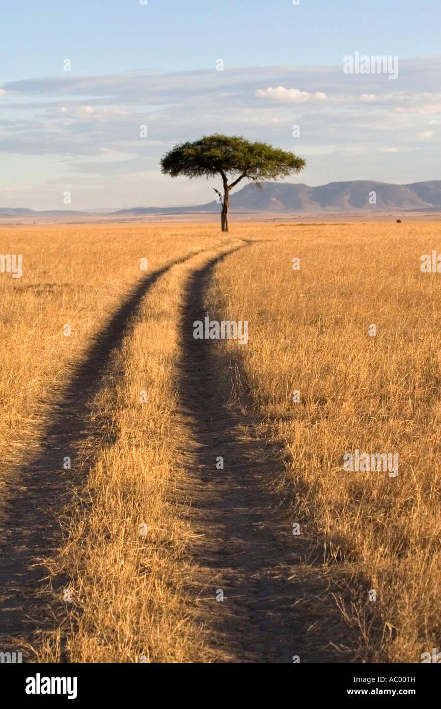 Savanna Landscape Masai Mara Kenya Africa - Stock Image