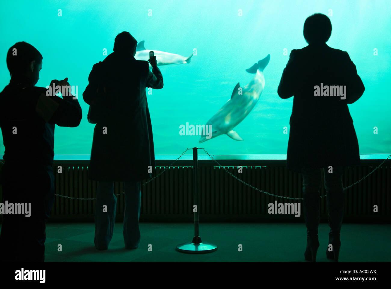 Aquarium Valencia Spain - Stock Image
