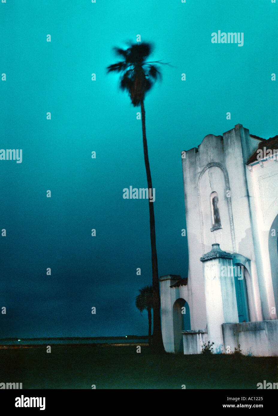 night shot of palm tree and building - Stock Image