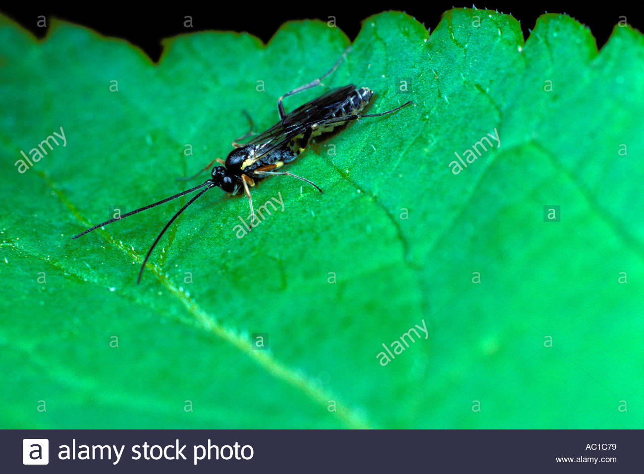 insect on green leaf - Stock Image