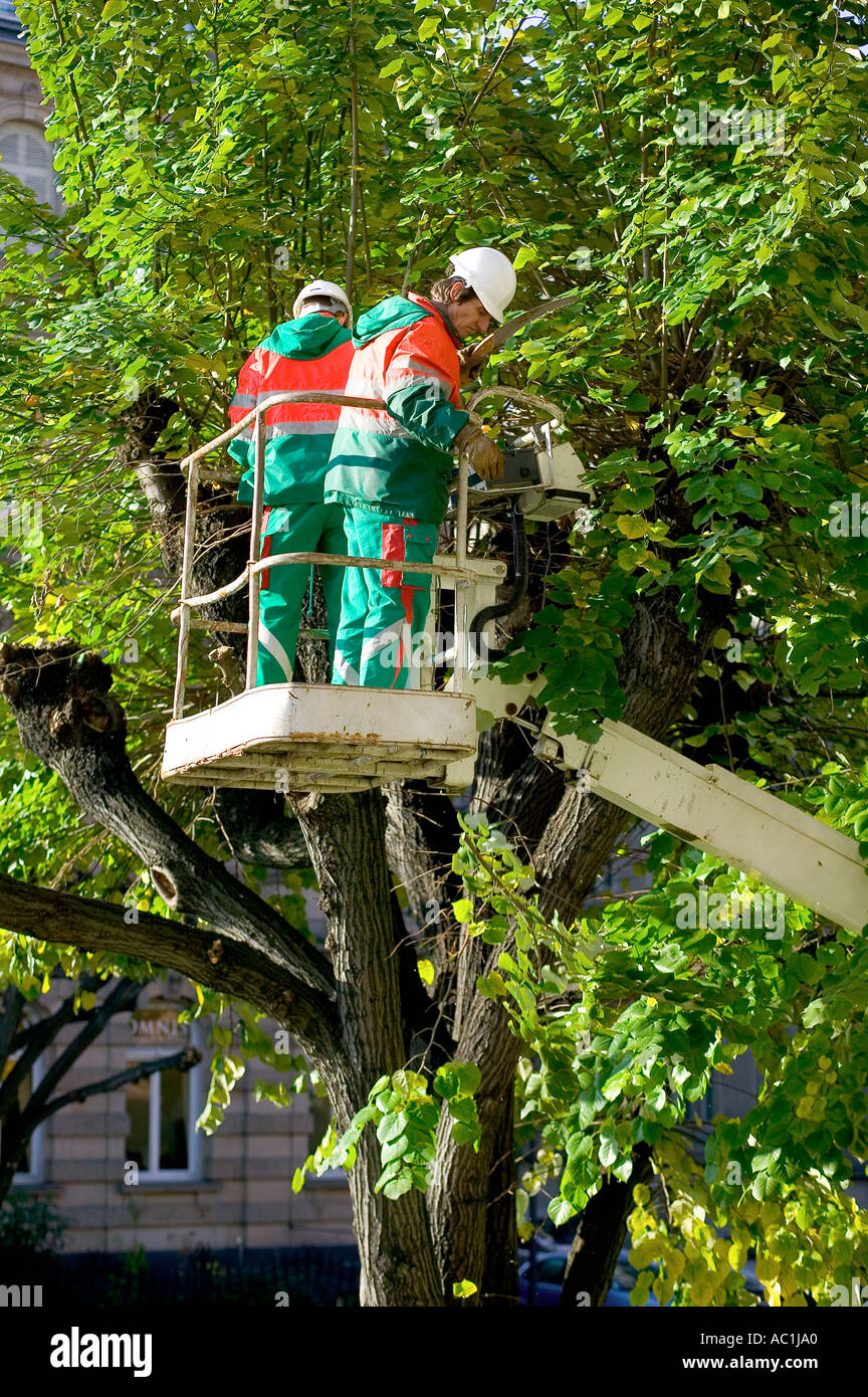 two tree surgeons on cherry picker pruning a lime tree strasbourg alsace france