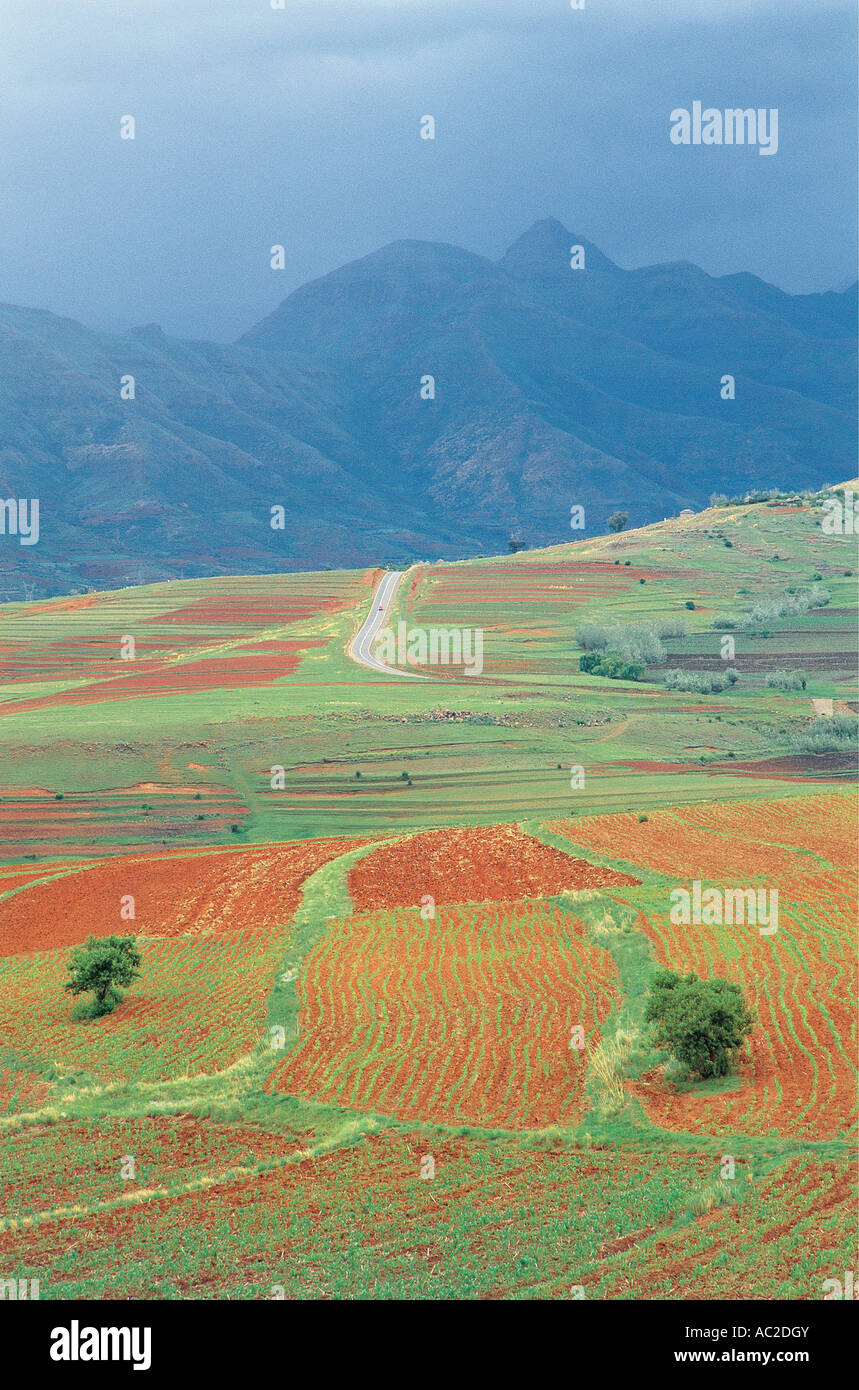 Maize crops starting to grow in foothills of Maloti Mountains Lesotho - Stock Image