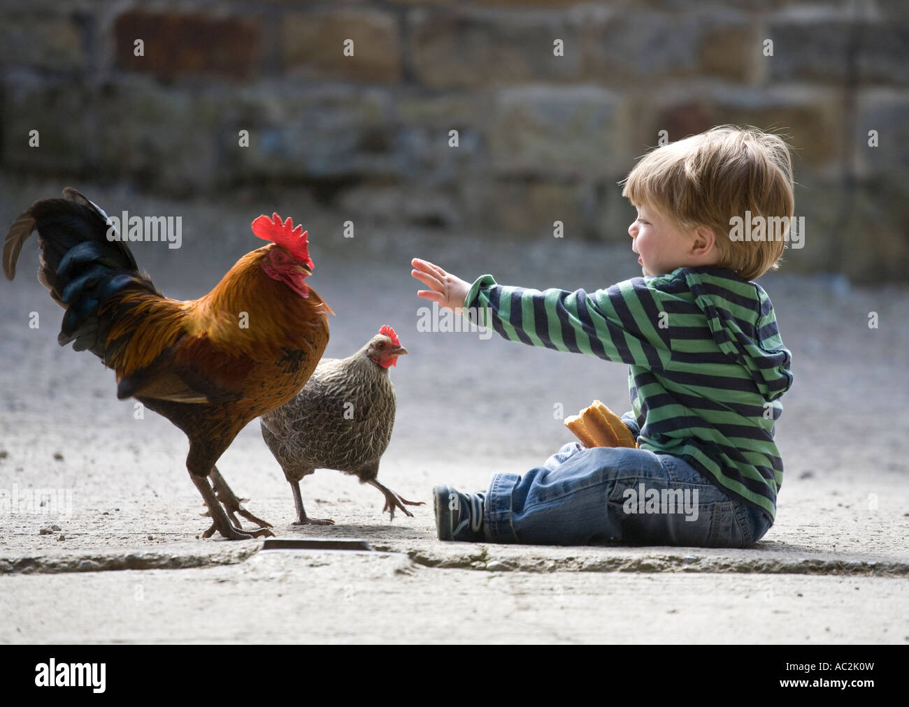 A young boy sits and feeds chickens while on holiday on a farm in North Yorkshire England UK - Stock Image