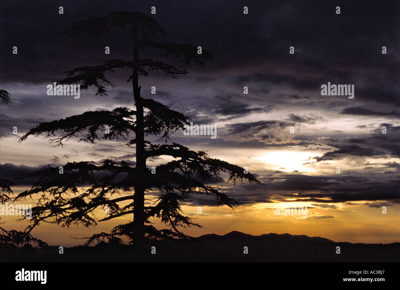 Tree sunset in Shimla - Stock Image