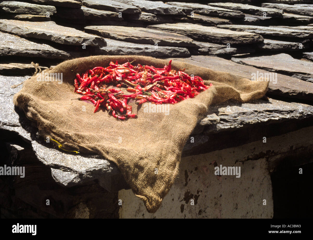 Chilis drying on roof - Stock Image