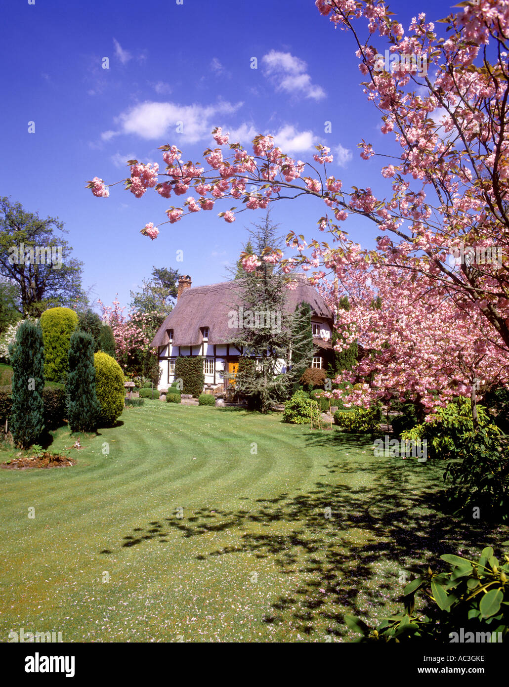 Emery Down, A New Forest cottage in spring - Stock Image
