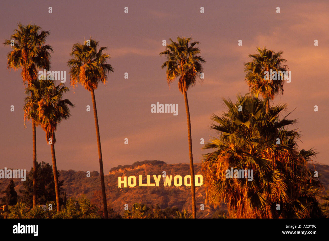 Hollywood Sign And Palm Trees Los Angeles California