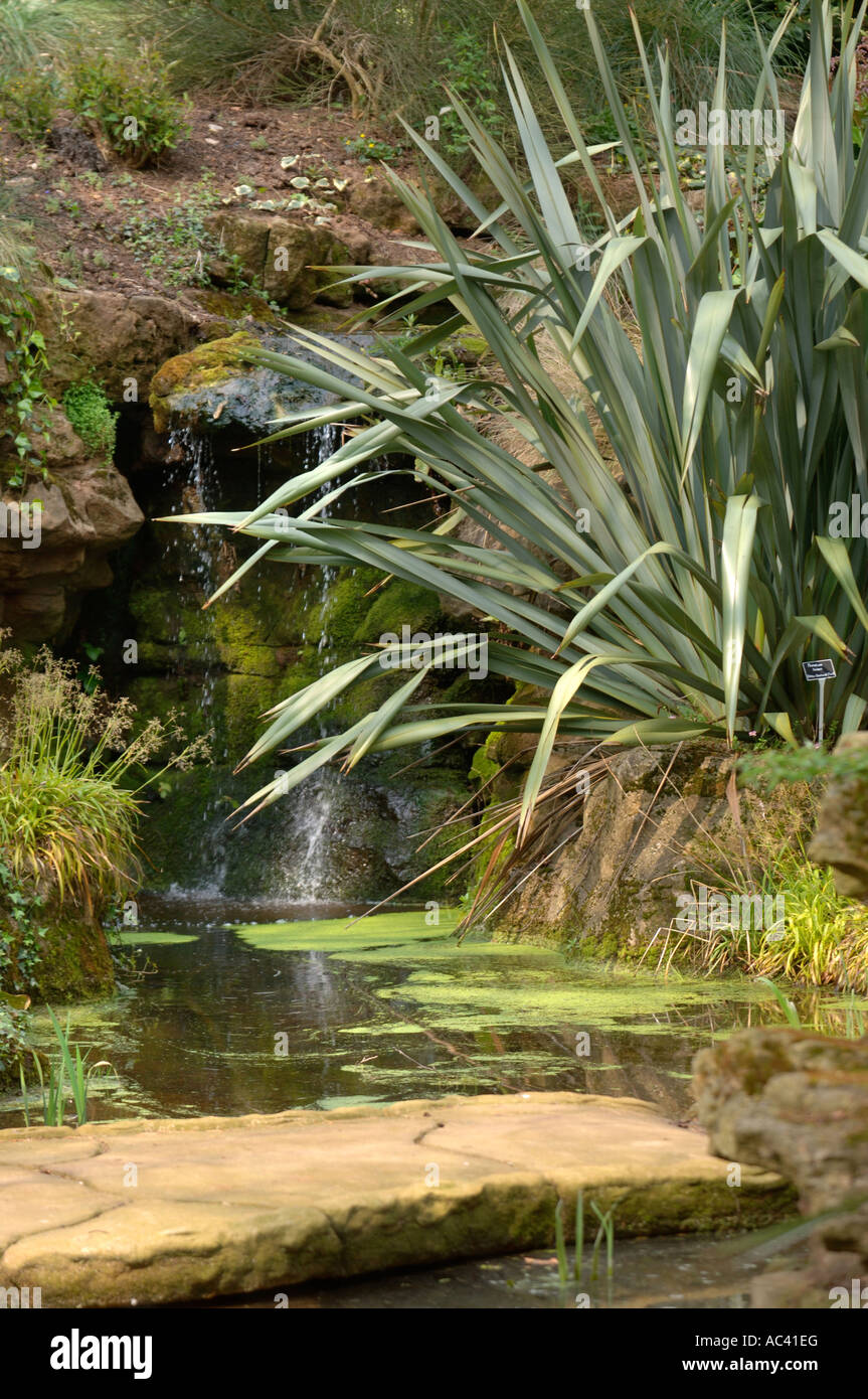 A SPECIMEN OF NEW ZEALAND FLAX OR PHORMIUM TENAX FLANKING A WATER FEATURE AT DEWSTOW GARDENS AND GROTTOES NEAR CHEPSTOW - Stock Image