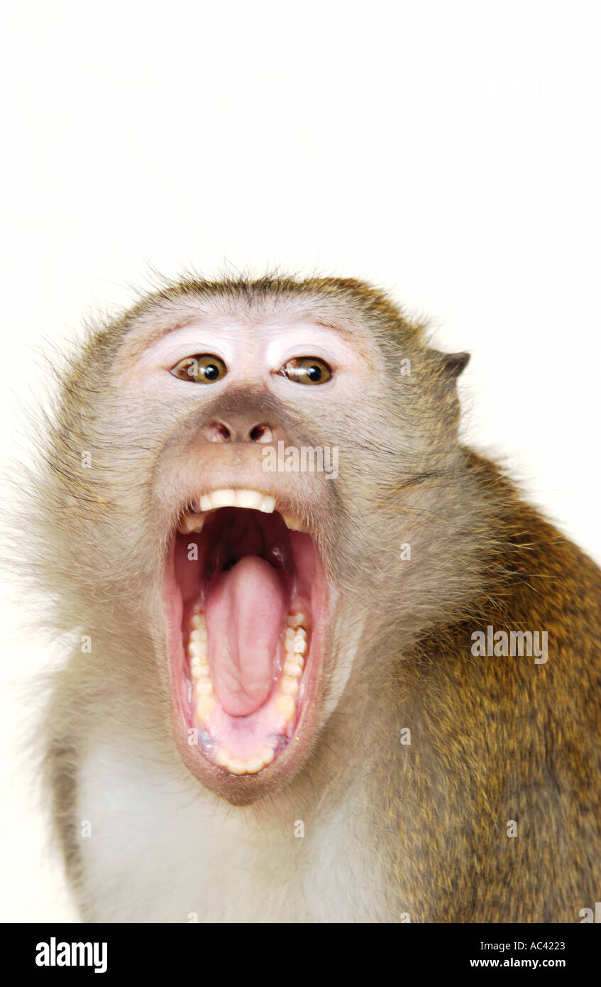 monkey-with-mouth-open-AC4223.jpg