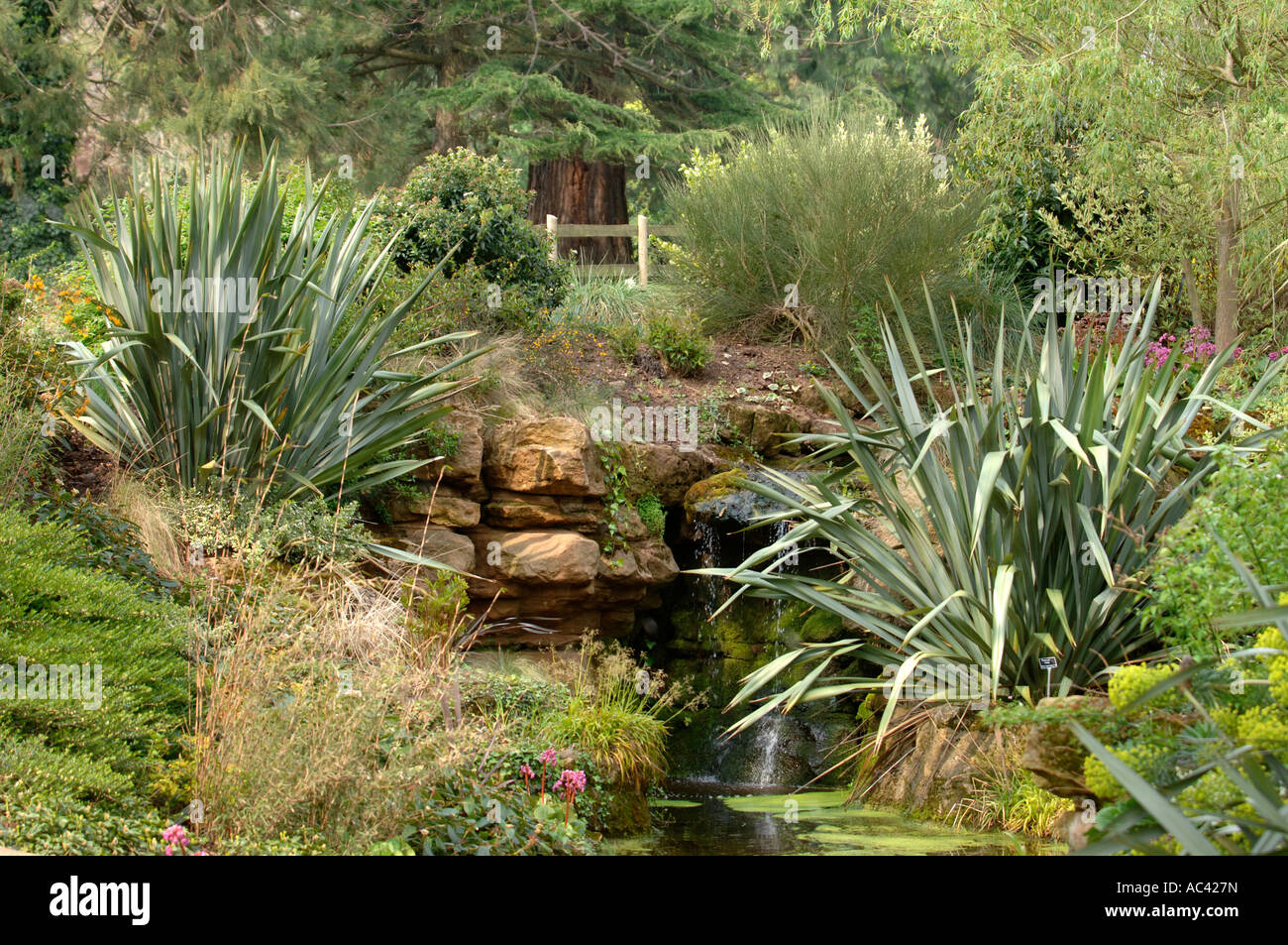 SPECIMENS OF NEW ZEALAND FLAX OR PHORMIUM TENAX FLANK A WATER FEATURE AT DEWSTOW GARDENS AND GROTTOES - Stock Image
