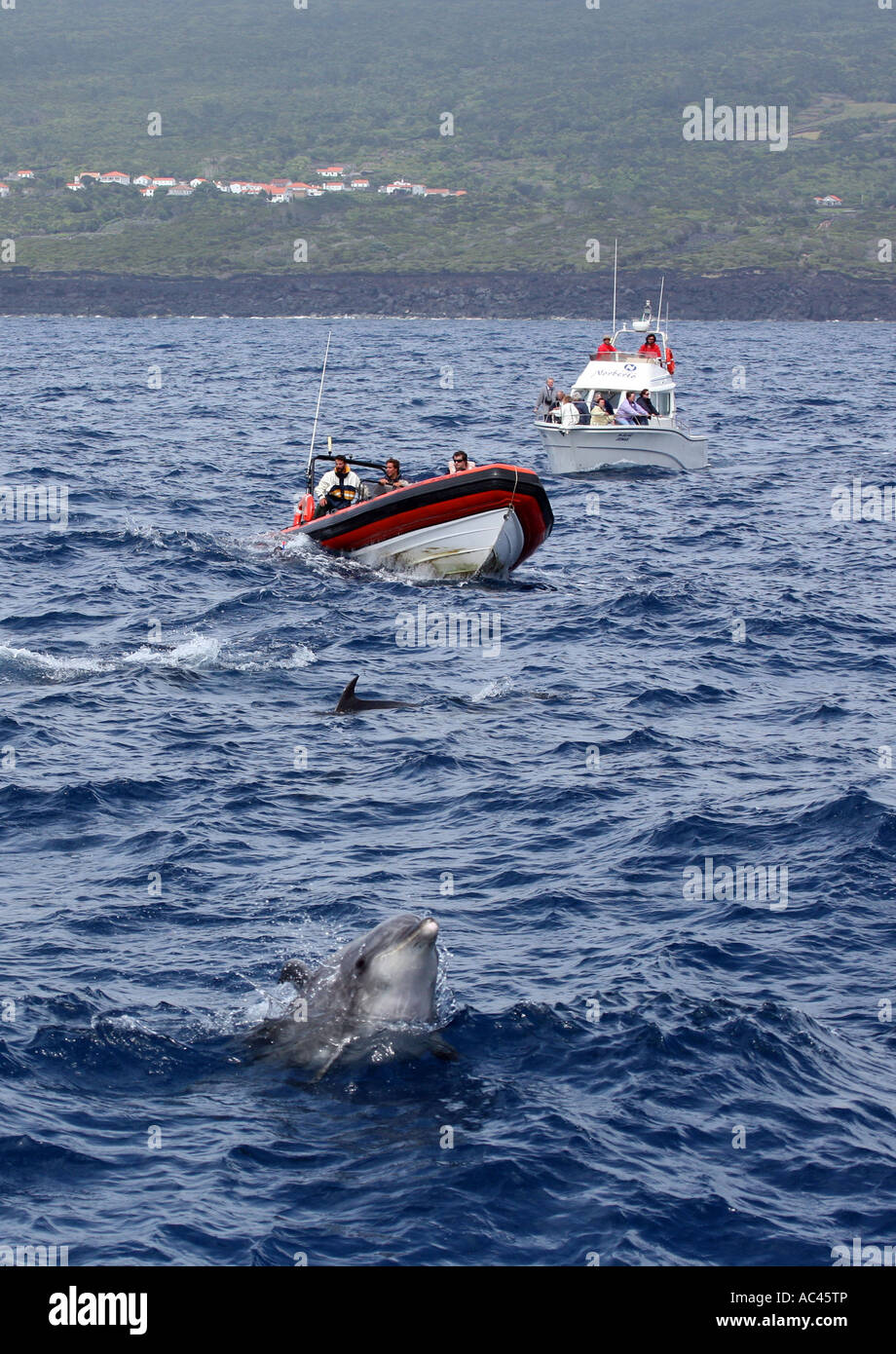 People dolphin watching in two boats watch bottlenose dolphins, the Azores, Atlantic Ocean - Stock Image