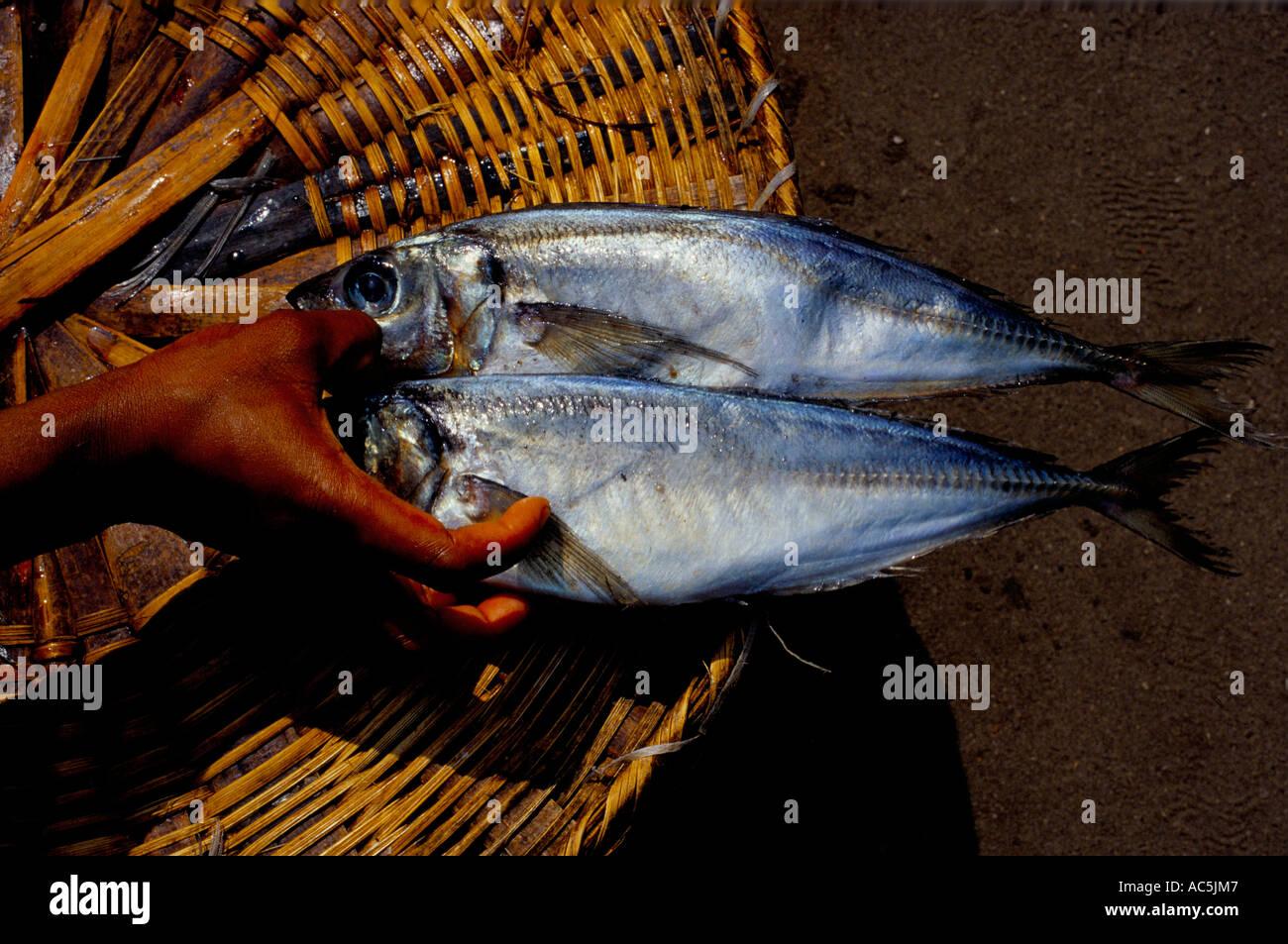 FRESH FISH ON SALE AT LAGOS MARKET NIGERIA 2001 - Stock Image