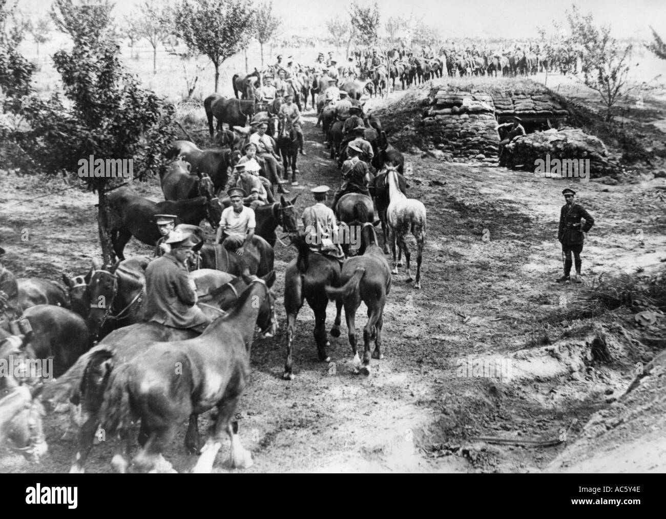 WWI British artillery horses at a watering hole probably in Palestine - Stock Image