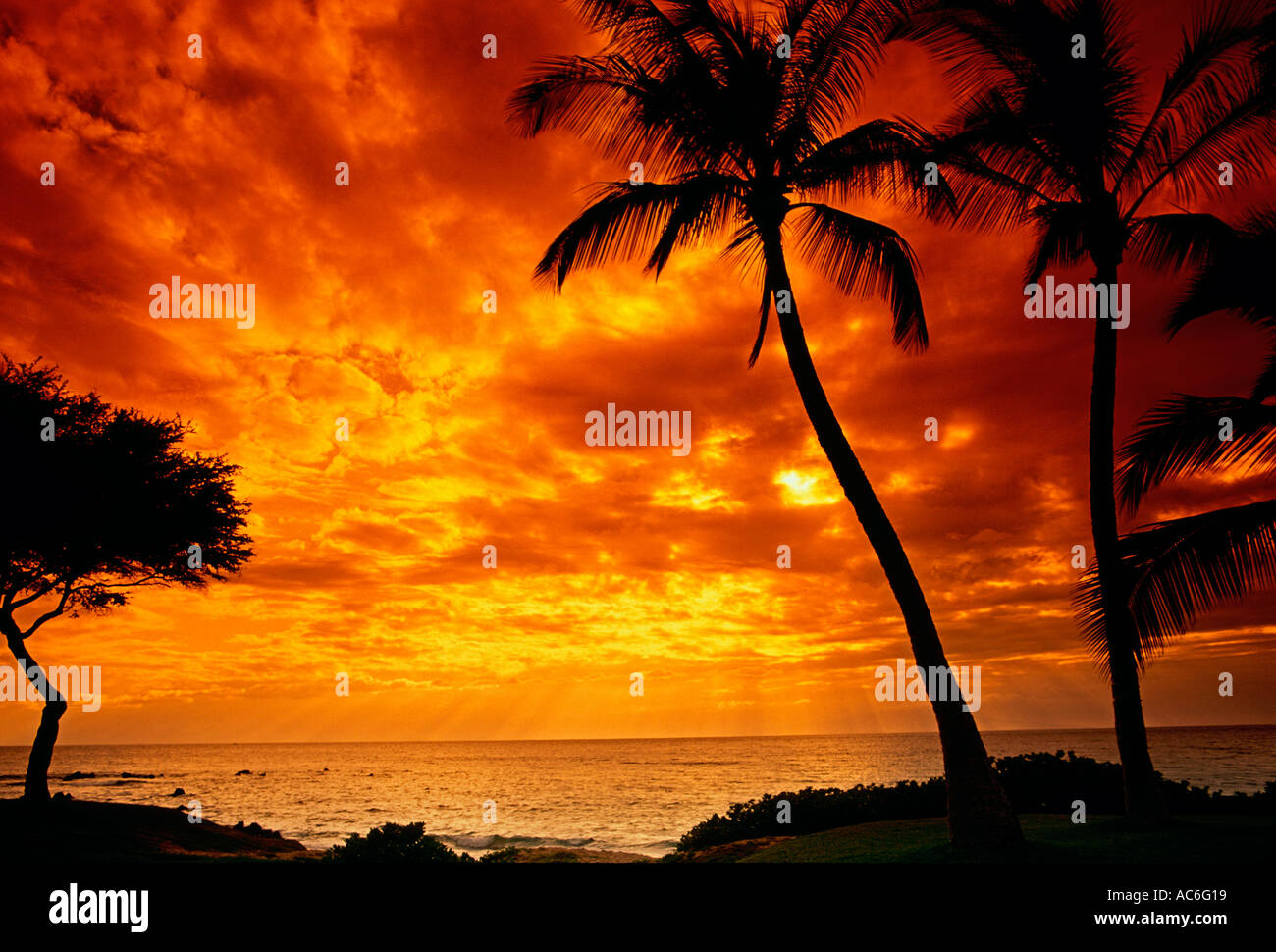 palm tree, palm trees, sunset, Ulua Beach, town of Wailea, Maui, Maui Island, Hawaii, United States Stock Photo