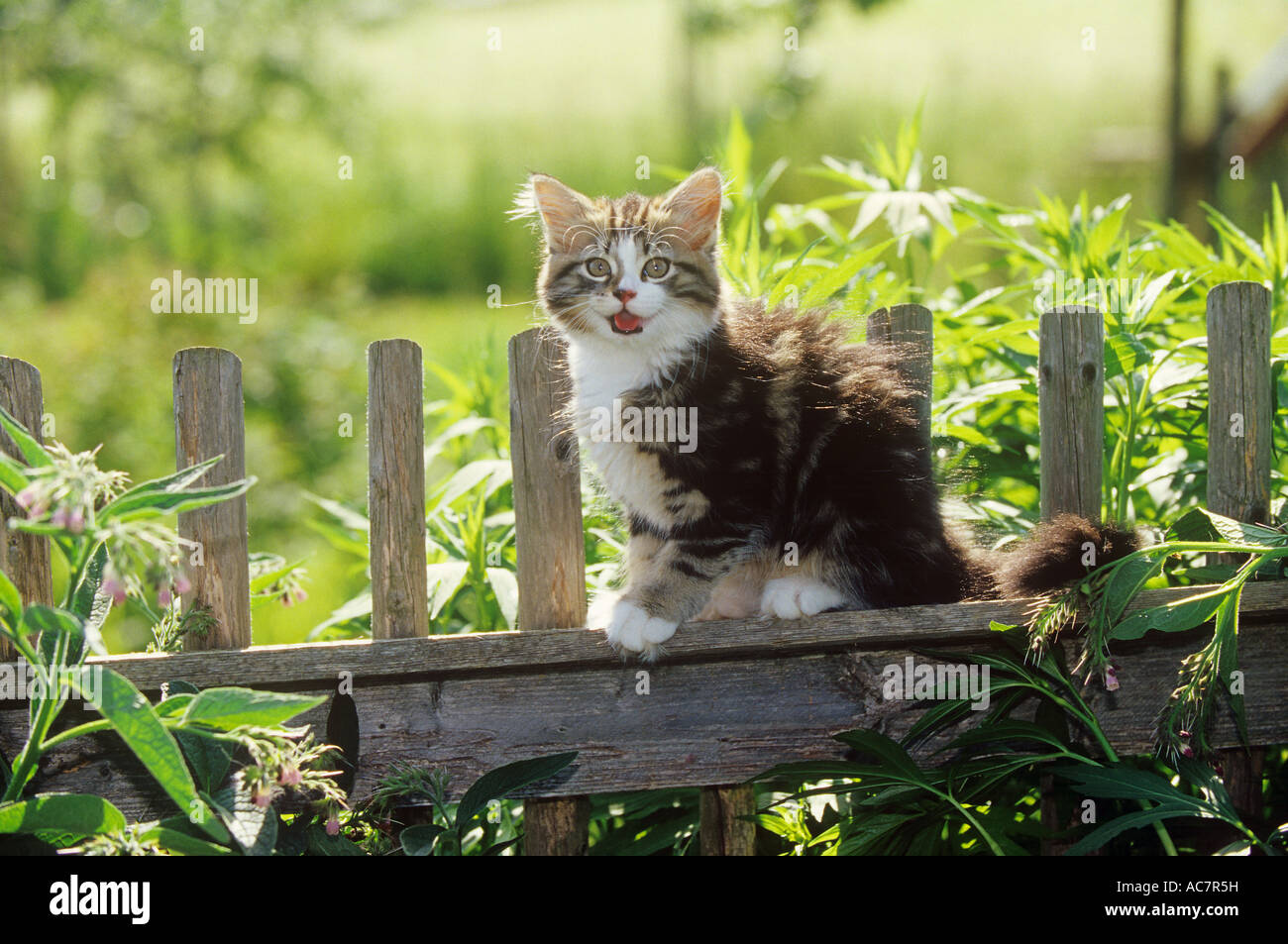 Kitten On Fence High Resolution Stock