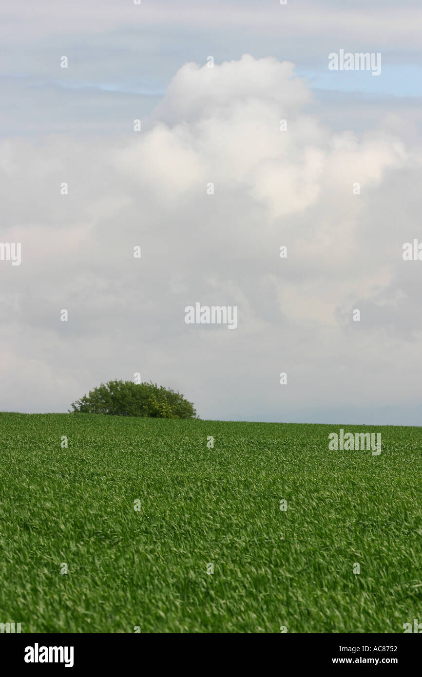 Cloudscape over field - Stock Image