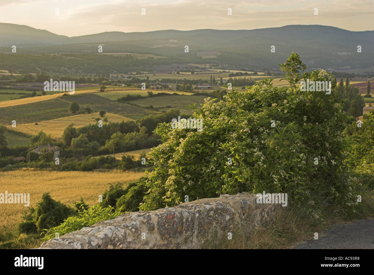 travelers-joy (Clematis vitalba), with cultural landscape, France, Provence - Stock Image