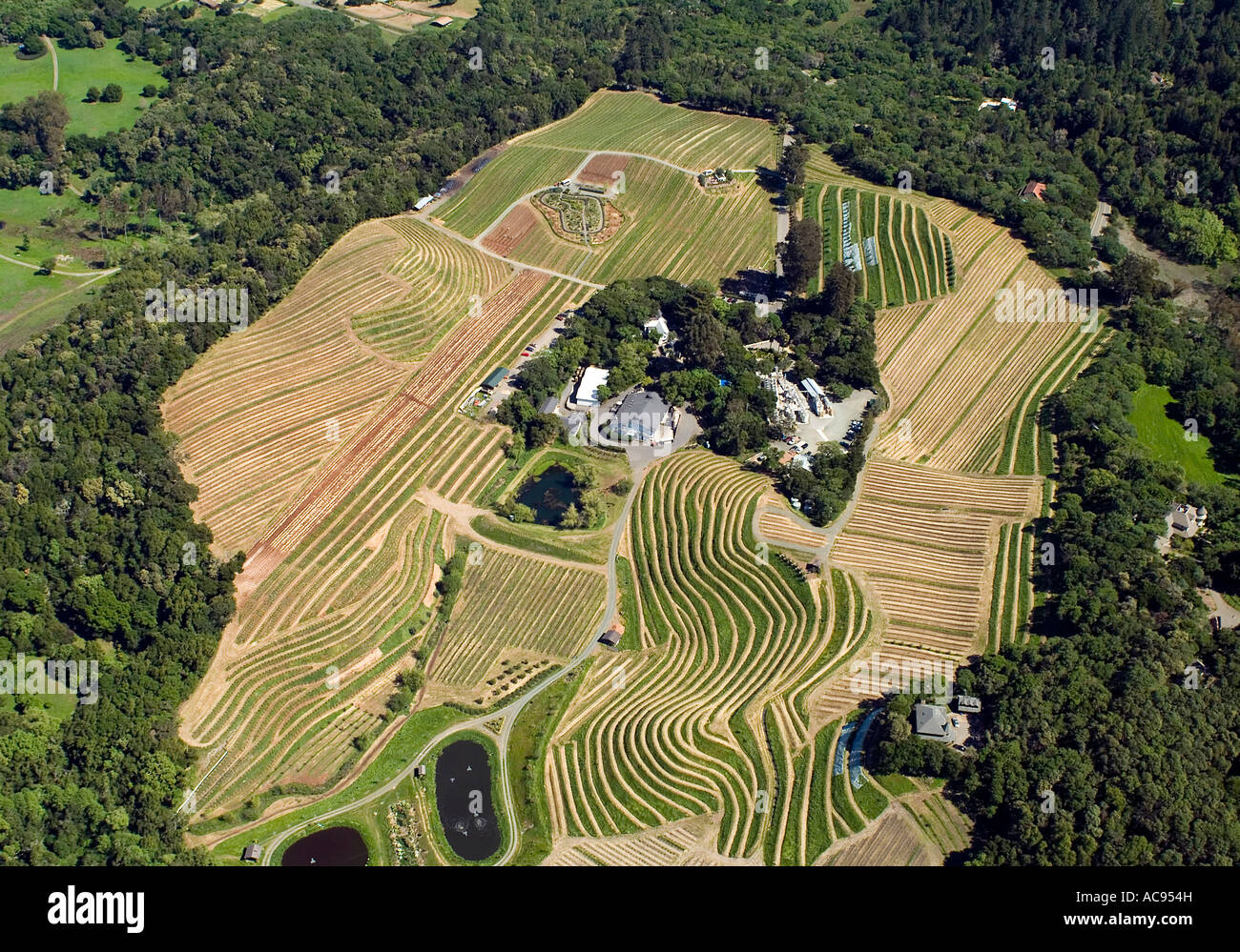 aerial view above Benziger Winery and vineyards in Glenn Ellen CA Sonoma county - Stock Image