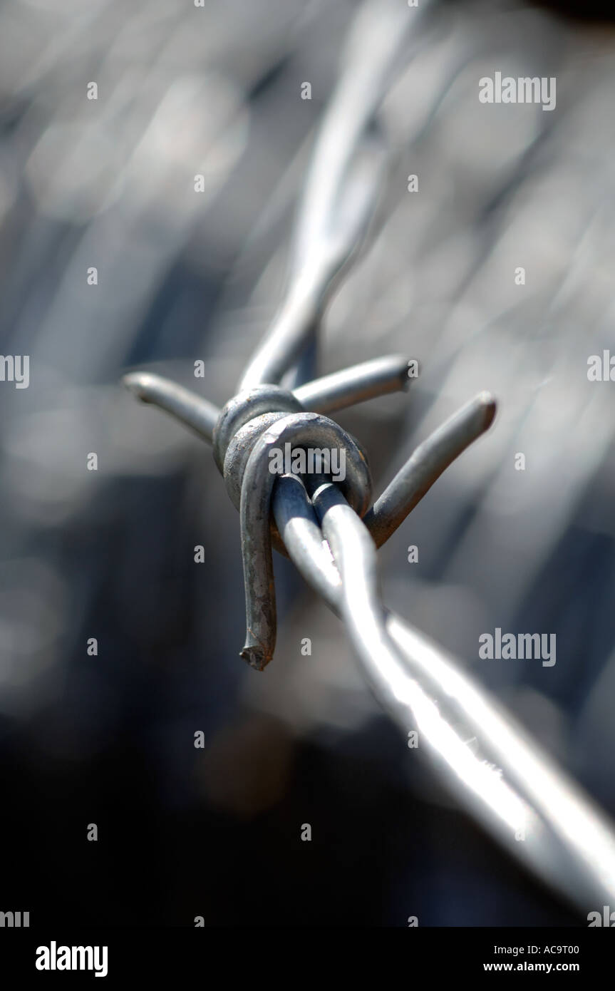 Close up of a roll of barbed wire fence - Stock Image