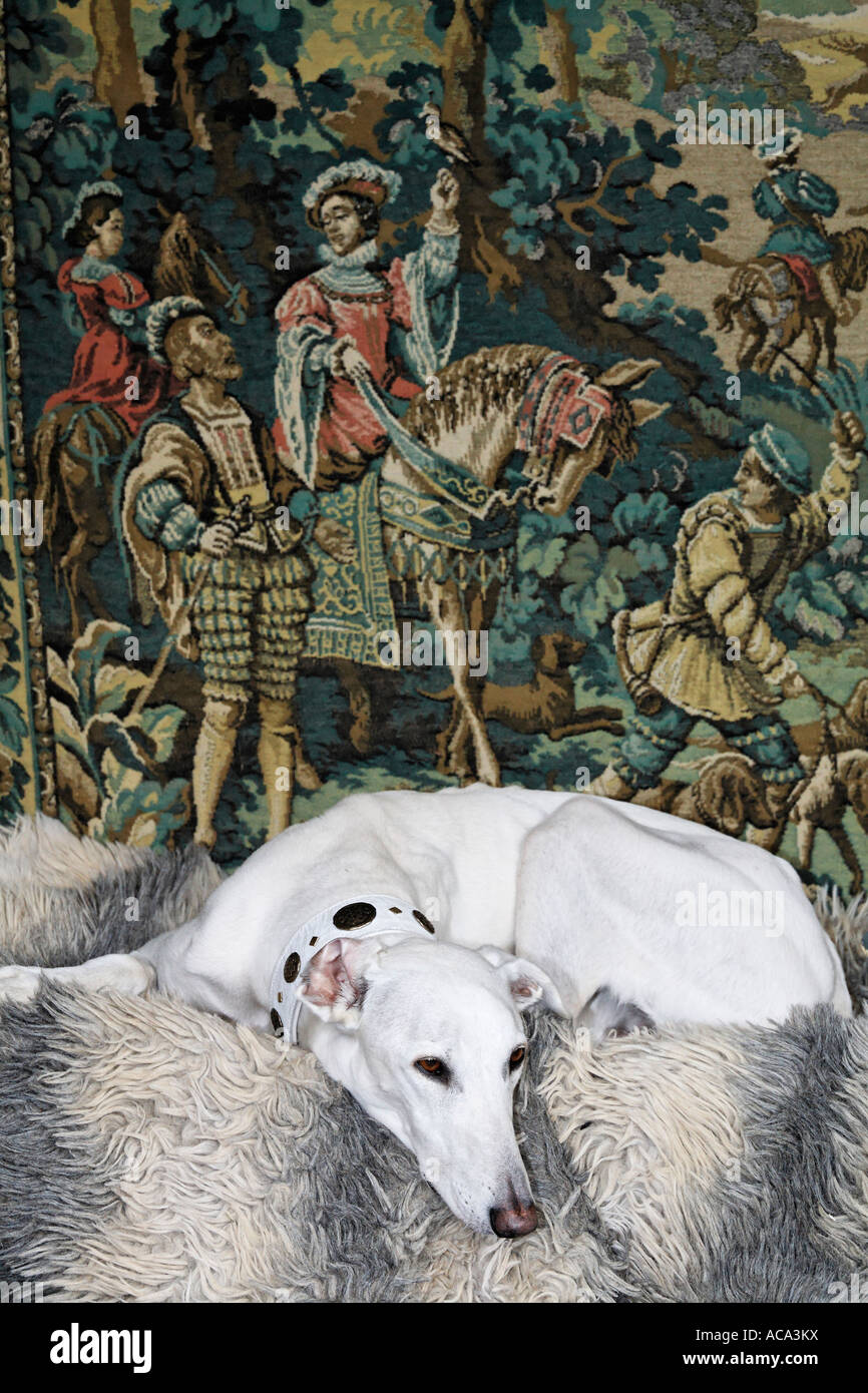 Greyhound lying in front of a tapestry showing a medieval hunting scene, Flachsmarkt, Krefeld-Linn, NRW, Germany Stock Photo