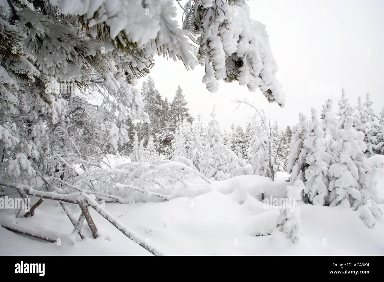 64c328b87 Winter Scene in Heavy Snow at Yellowstone National Park, Wyoming ...