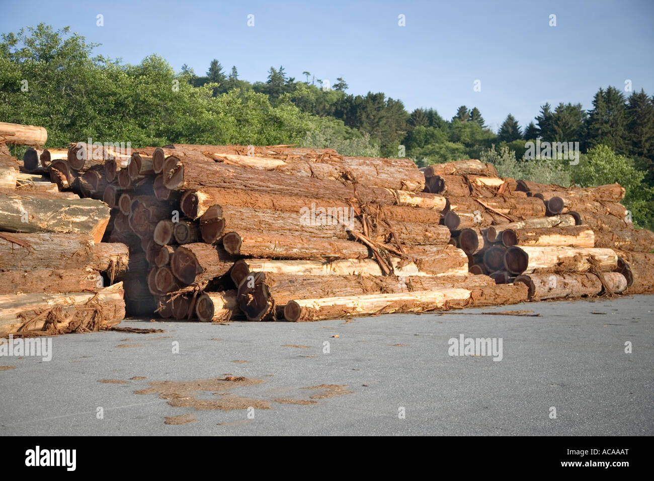 Redwood logs decked at lumber mill, - Stock Image
