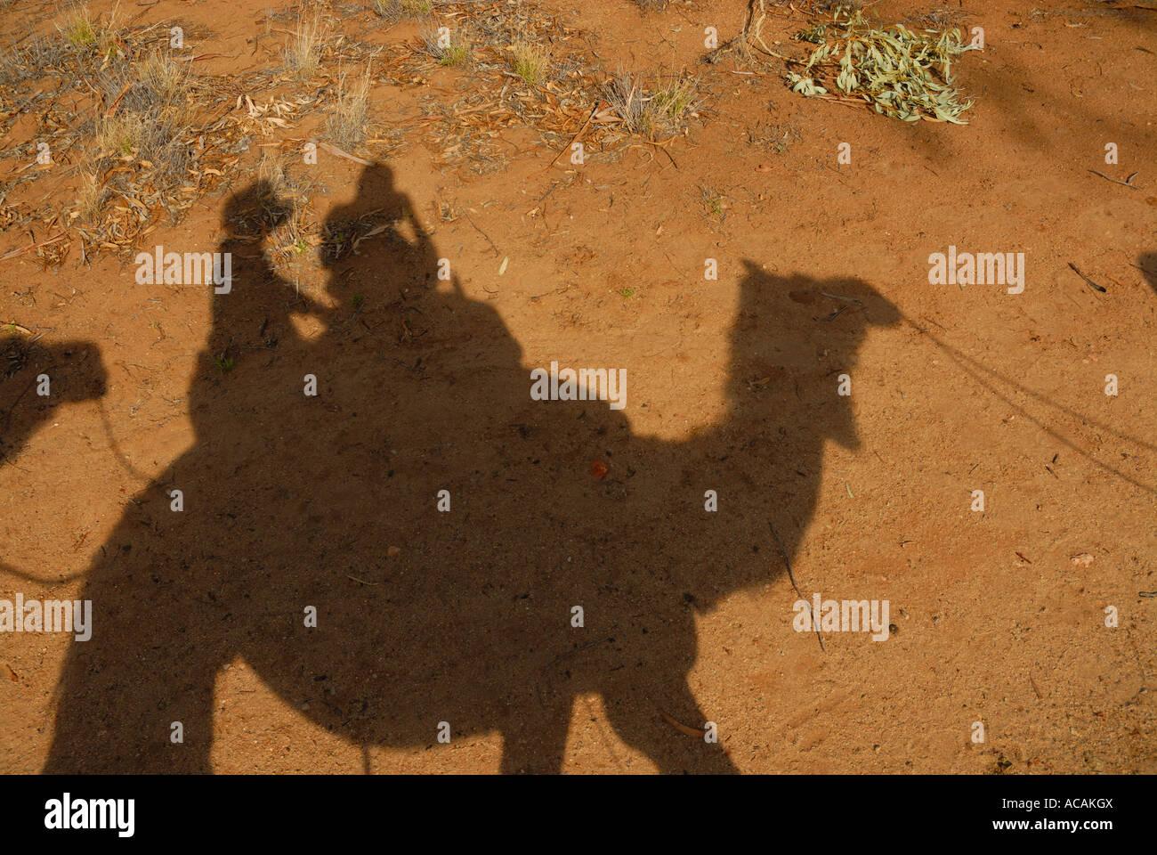 Camel safari, Alice Springs, Northern Territory, Australia Stock Photo