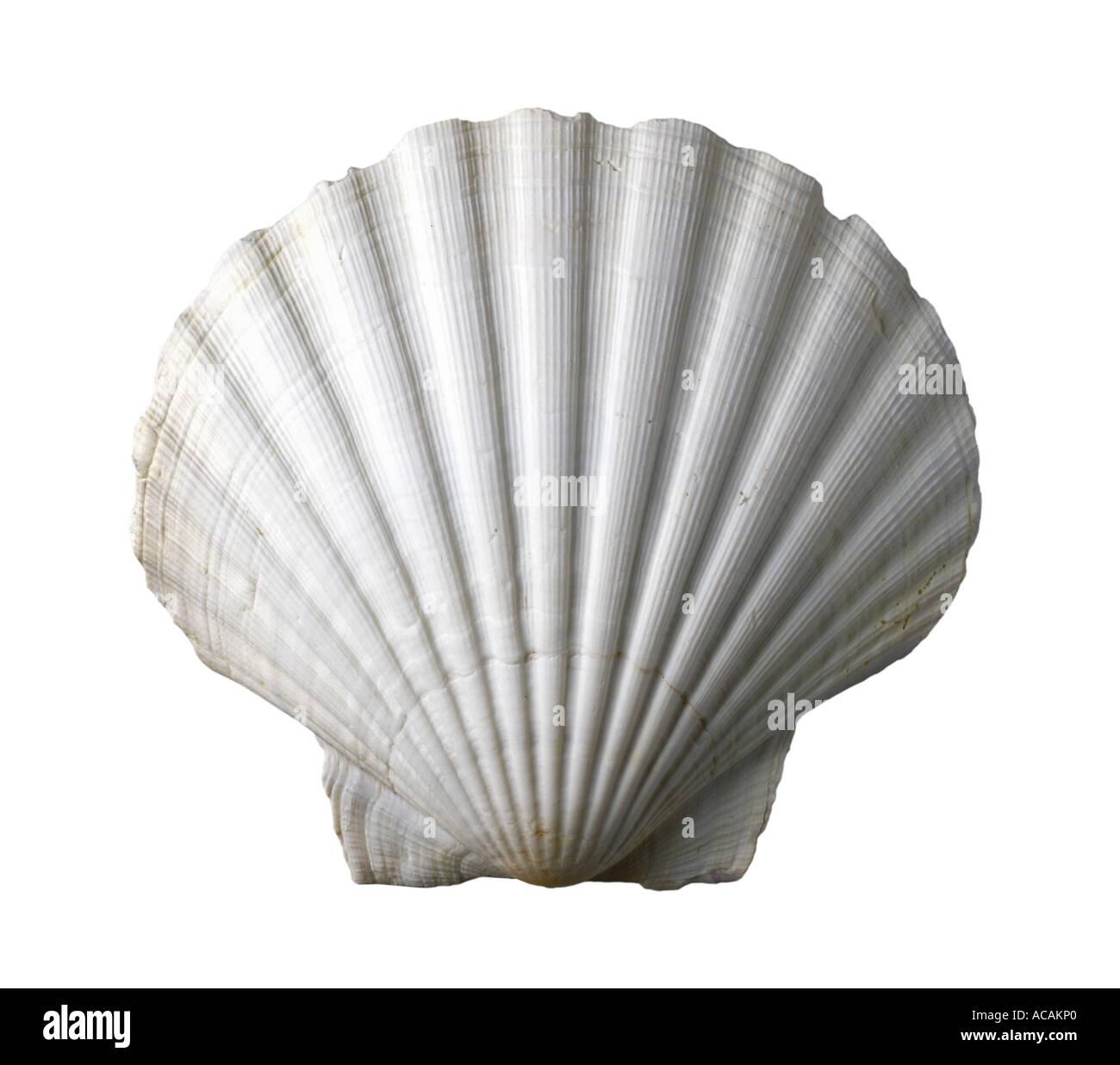 Shellfishing Cape Cod: Scallop Edge Stock Photos & Scallop Edge Stock Images