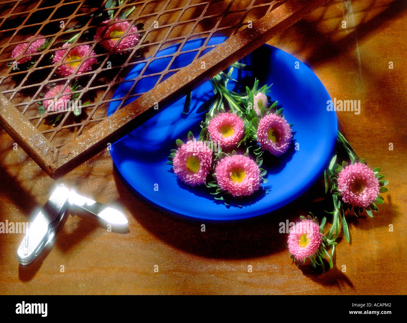 Pink Flowers in a Blue Bowl Stock Photo