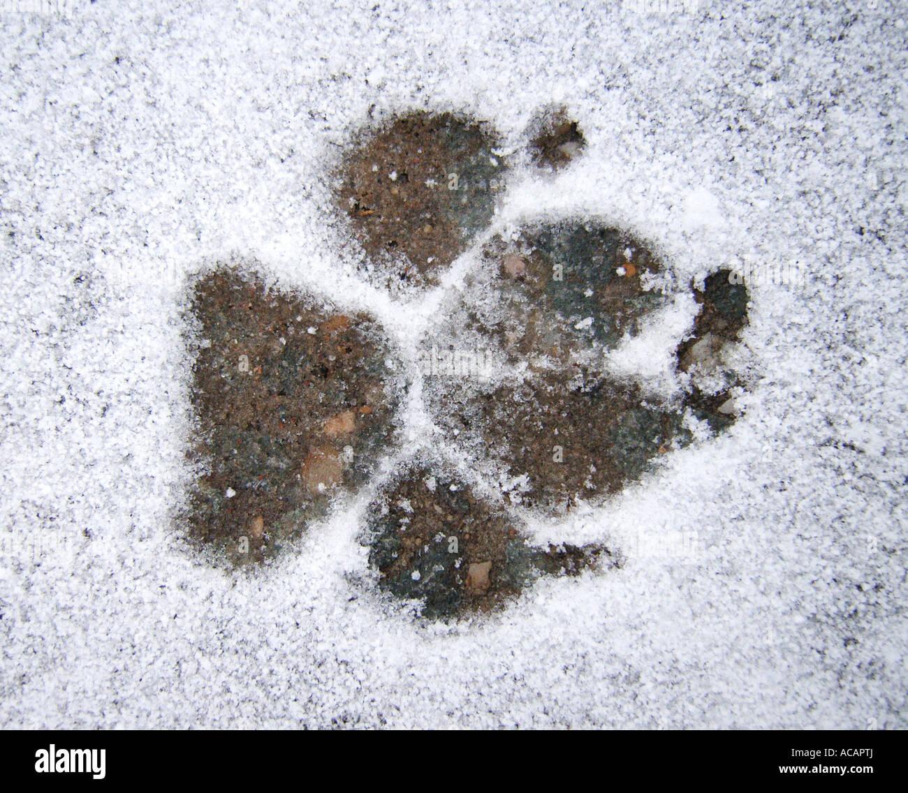 fussabdruck im schnee stock photos & fussabdruck im schnee stock