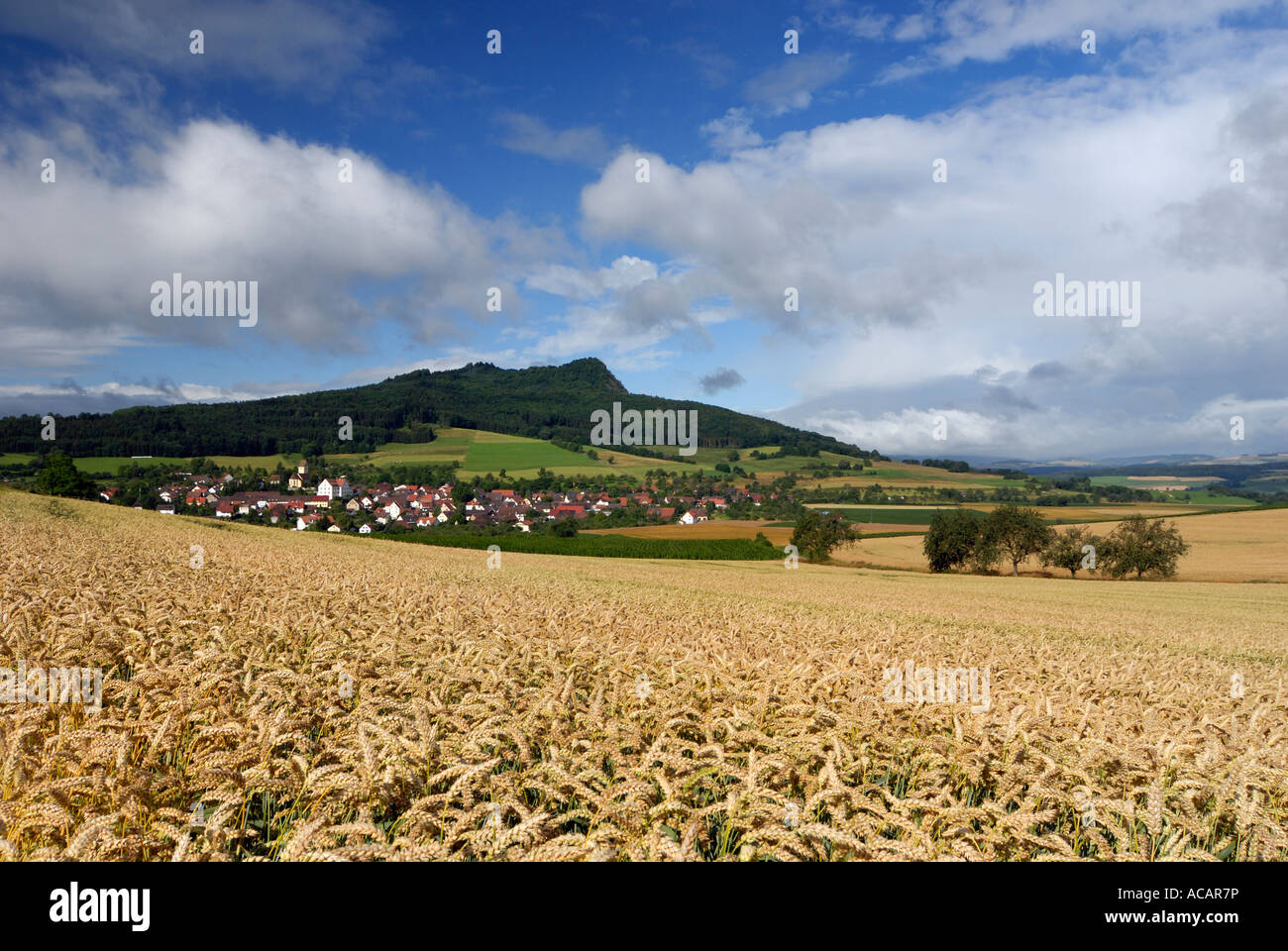 Wheat-field and the hegau volcano Hohenstoffeln in the background, Weiterdingen, Baden Wuerttemberg, Germany, Europe. - Stock Image