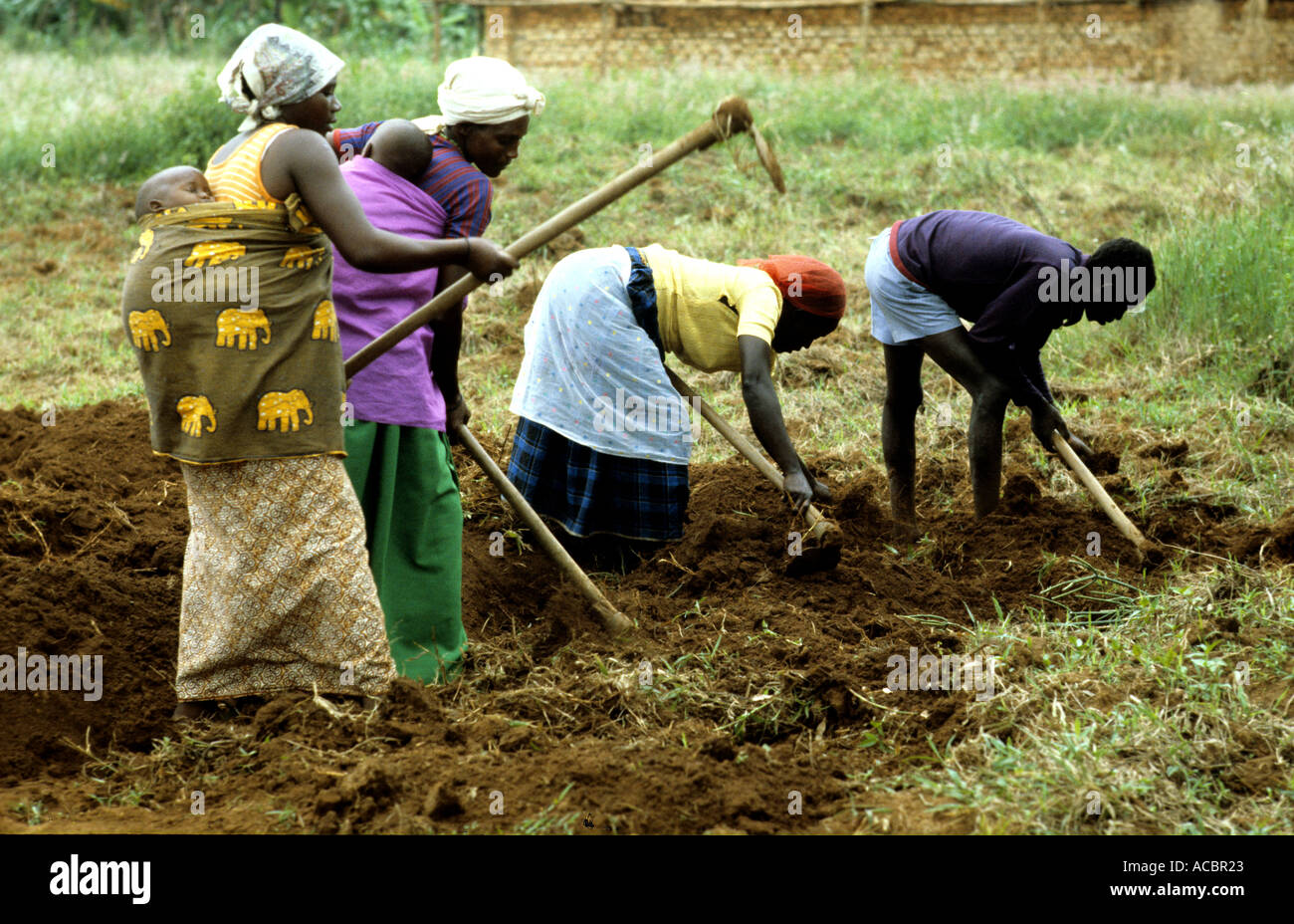 WOMEN CULTIVATING USING WITH BASIC TOOLS IN RWANDA Stock Photo