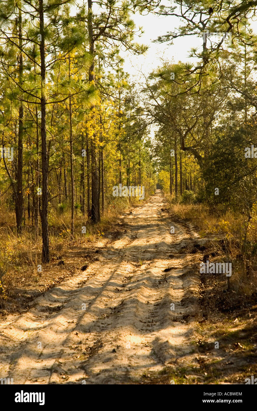 Sand forest road Gold Head Branch State Park Florida - Stock Image