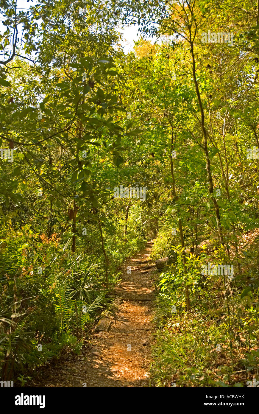 Hiking Florida trail Gold Head Branch State Park - Stock Image