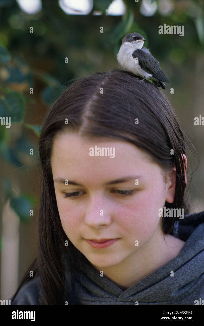 Girl Teen Teenager Transition Age 13 14 15 Years Brunette: Baby Swallow On Teen Girls Head Stock Photo: 7494258