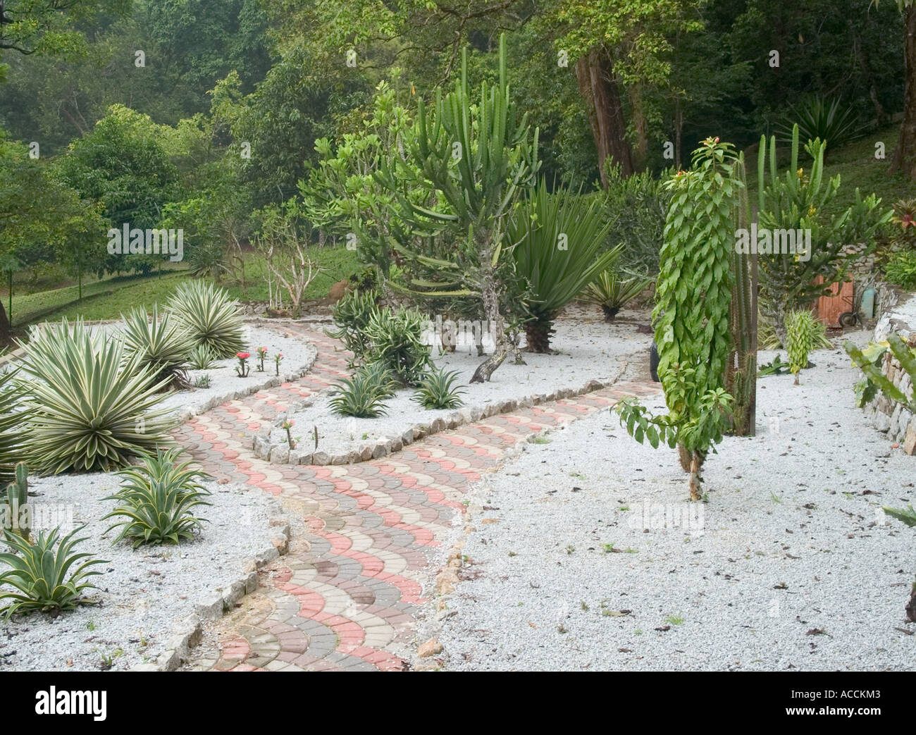 Delightful VIEW OF SECTION OF BOTANICAL GARDEN, PENANG, MALAYSIA, ASIA,