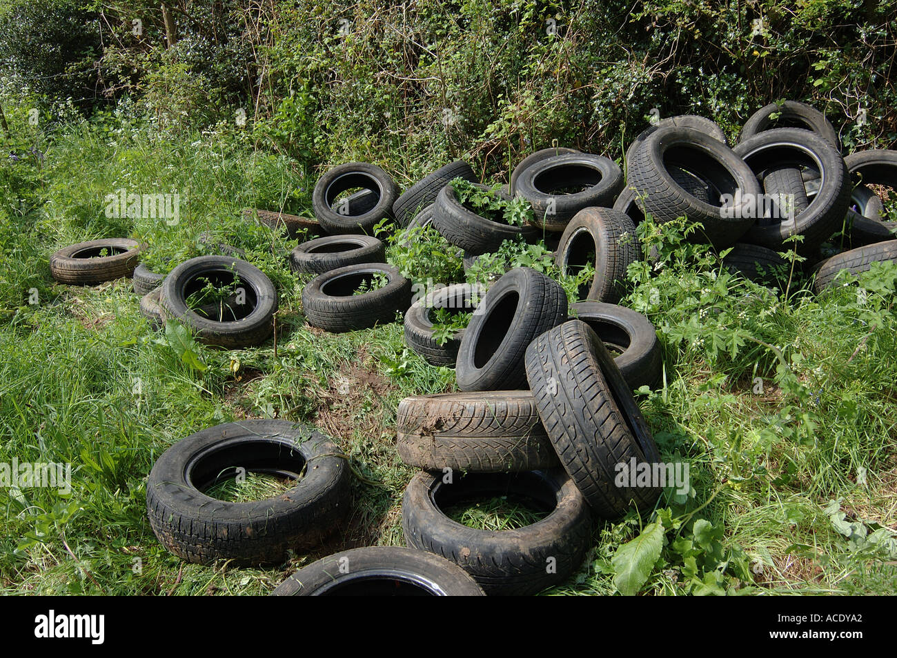 Tyres illegally dumped by farm track and hedgerow on farmland in Devon - Stock Image
